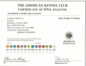 Aspen's AKC DNA Certificate