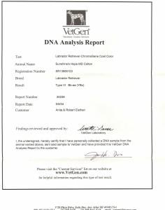 Aspen's DNA Color Results