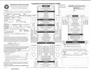 Boomer CERF SR42060105