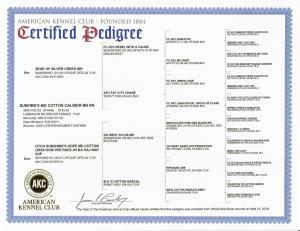 Caliber's Certificates