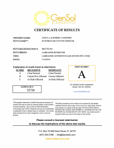 Porsche Centronuclear Myelopathy Certification