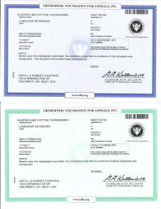 Thunderbird's Certificate
